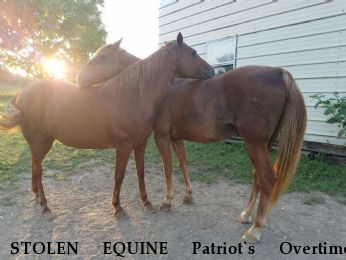 STOLEN EQUINE Patriot`s Overtime, Willow RECOVERED 12/30/18 Near Long Lane, MO, 65590